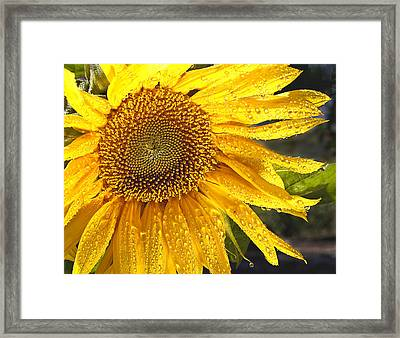 Here Comes The Sun Framed Print by Jean Noren