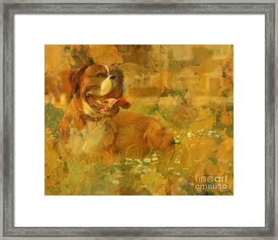 Here Doggie Framed Print by Barbara R MacPhail