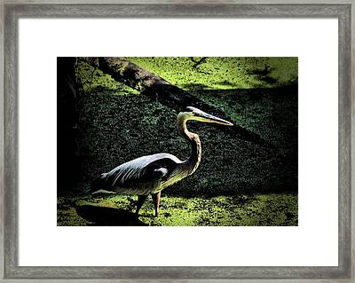 Framed Print featuring the photograph Here Fishy Fishy by Robert McCubbin