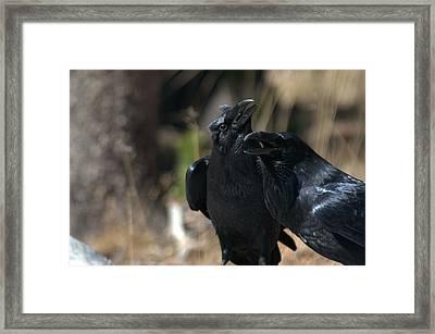 Here He Is Framed Print