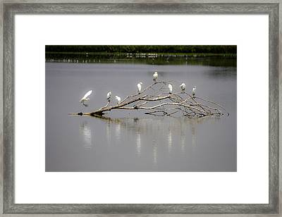 Here I Come Framed Print by Menachem Ganon