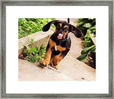 Here I Come With A Big Wet Kiss Just For You Framed Print by Rosemarie E Seppala