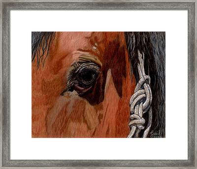 Here Is Looking At You Framed Print by Gail Seufferlein