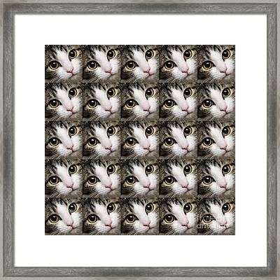 Here Kitty Kitty Close Up 25 Framed Print