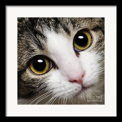 Here Kitty Framed Prints