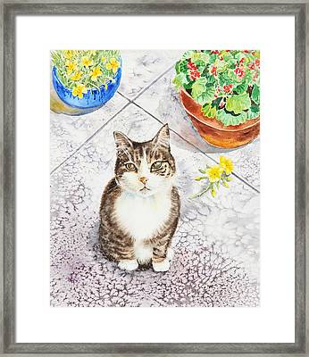 Here Kitty Kitty Kitty Framed Print