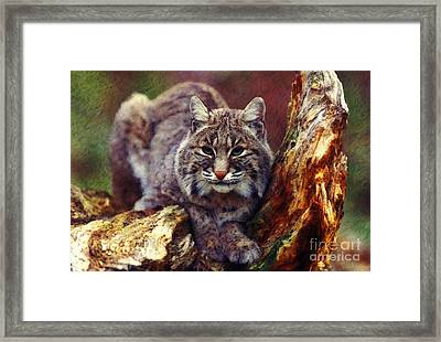 Framed Print featuring the digital art Here Kitty Kitty by Lianne Schneider
