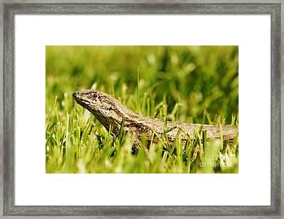 Here Leezard Leezard Leezard Framed Print by Lynda Dawson-Youngclaus