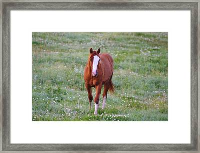 Here She Comes Framed Print by Jeff Swan