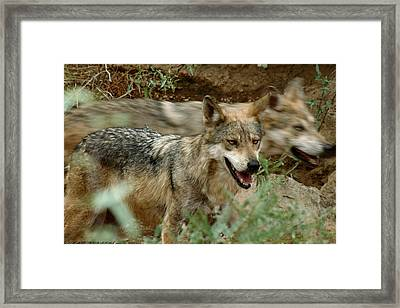 Framed Print featuring the photograph Here Today Gone Tomorrow by Elaine Malott