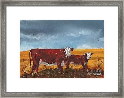 Hereford Cow And Calf Framed Print by Tim Oliver