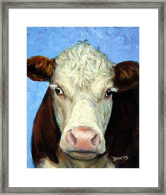 Hereford Cow On Blue Framed Print by Dottie Dracos