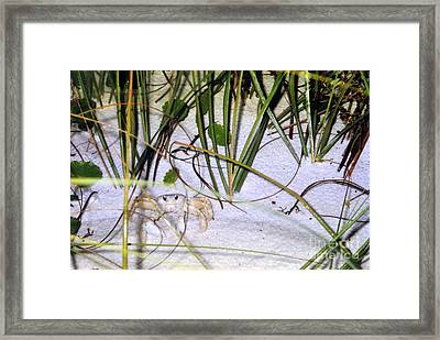 Heres Lookin At You Framed Print by Marilyn Detwiler