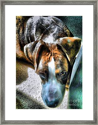 Framed Print featuring the photograph Here's Lookin Atchya by Robert McCubbin