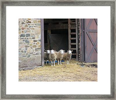 Here's Looking At Ewe Framed Print