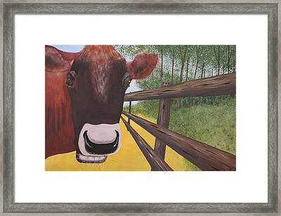 Here's Looking At Moo Framed Print by Tim Townsend