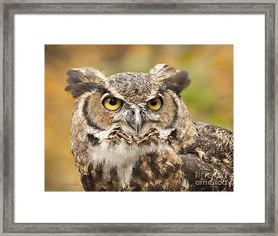 Framed Print featuring the photograph Here's Looking At You by Carol Lynn Coronios