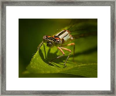 Heres Looking At You Framed Print by Jean Noren