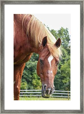 Here's Looking At You Framed Print by Joann Long