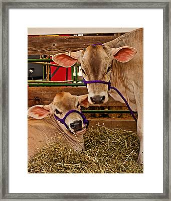 Heres Looking At You Framed Print by Michael Porchik
