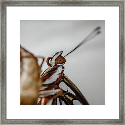 Here's Looking At You Squared Framed Print by TK Goforth
