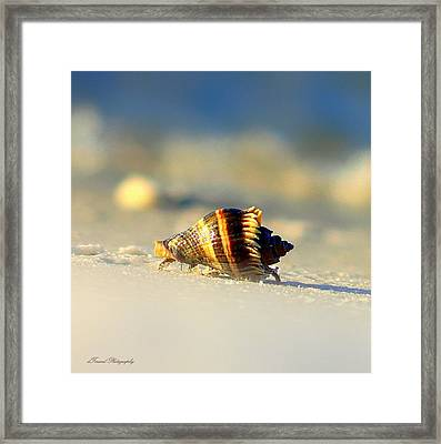 Hermit Crab  Framed Print