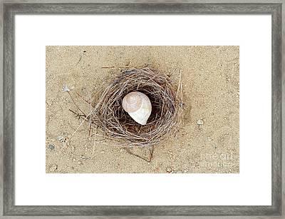 Hermit Framed Print by Michal Boubin