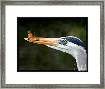 Framed Print featuring the photograph Heron And Butterfly by Mariarosa Rockefeller