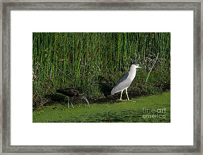 Heron And Ibis Framed Print by Mark Newman