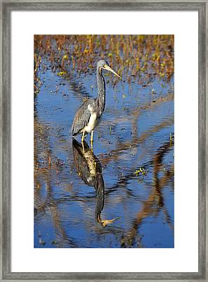 Heron And Reflection In Jekyll Island's Marsh Framed Print by Bruce Gourley