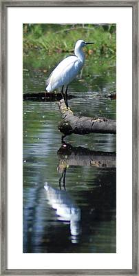 Heron And Reflection Framed Print