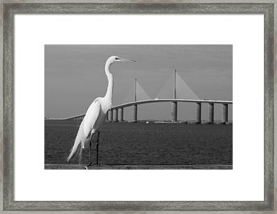 Framed Print featuring the photograph Heron And Skyway by Daniel Woodrum