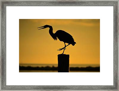 Heron At Sunrise Framed Print by Leticia Latocki