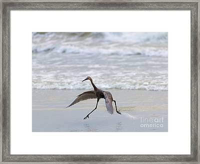 Heron Ballet Framed Print by Mike  Dawson