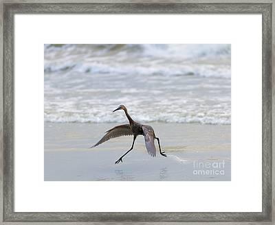 Heron Ballet Framed Print
