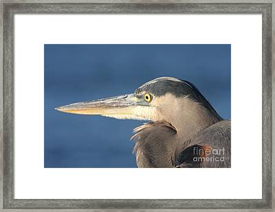 Heron Close-up Framed Print by Christiane Schulze Art And Photography
