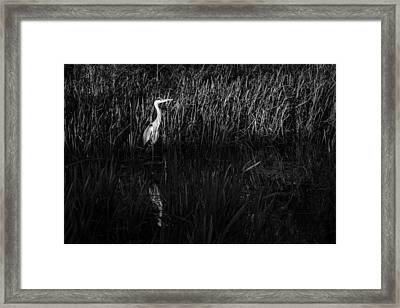 Framed Print featuring the photograph Heron by David Isaacson