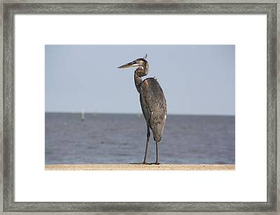Heron Framed Print by Donna G Smith