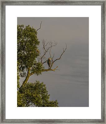 Heron Greets The Day Framed Print