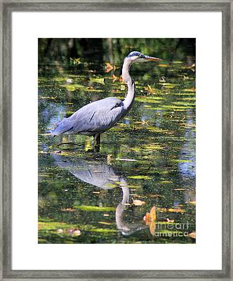 Framed Print featuring the photograph Heron Hunter by Kenny Glotfelty