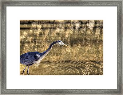 Heron Hunting In Maryland Canal Framed Print by Francis Sullivan