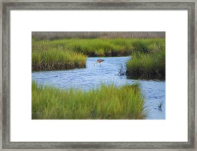 Heron In A Salt Marsh Framed Print by Bill Cannon