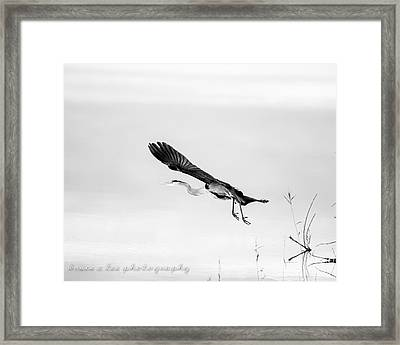 Heron In Black And White 2 Framed Print by Bruce A Lee