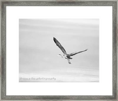 Heron In Black And White Framed Print by Bruce A Lee