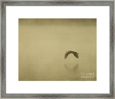 Heron In Flight  Framed Print by Christopher Mace