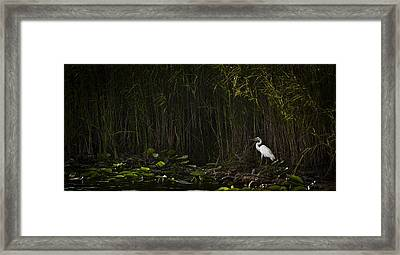 Heron In Grass Framed Print
