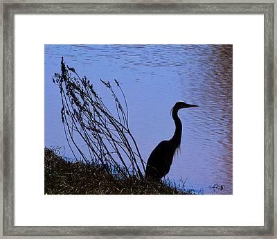 Heron In Shadow - 10467g Framed Print by Paul Lyndon Phillips