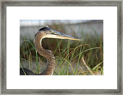 Heron In The Grass Framed Print