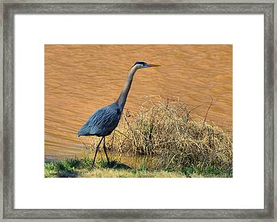 Heron In The Rough - 51010656e Framed Print by Paul Lyndon Phillips