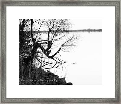Heron In Tree Framed Print by Bruce A Lee